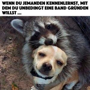 Waschbär Hund Freunde Meme